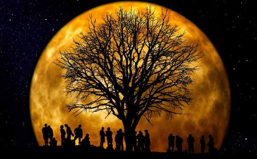 CHAPPY 15 – THE CRAZY TREE…….BeYou
